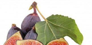 Figs in your Pregnancy Diet